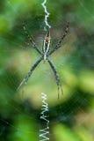 Okręgu tkacza pająk Zdjęcie Stock
