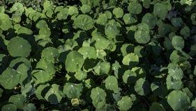 Okręgu zielony liść w ogródzie Fotografia Royalty Free