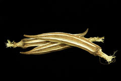 Okra- eller sockerkaksbit i form av ett fingerväxt Royaltyfri Fotografi