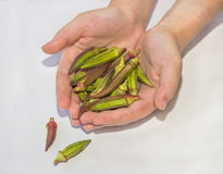 Okra Royalty Free Stock Photography