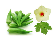 Okra Fruits Leaf and Flower. Isolated on white Stock Photography