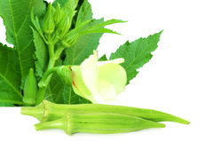 Okra ladyfinger vegetable Royalty Free Stock Images