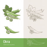 Okra Royalty Free Stock Photos