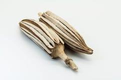 Okra secado Fotografía de archivo