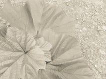 Okrabladeren op beton in roomtoon die wordt voorgesteld Stock Fotografie