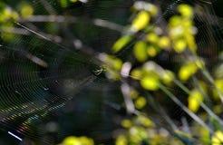 Okręgu tkacza pająk i swój sieć Zdjęcia Stock