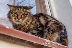 Okrutnie, zły kot na windowsill na ulicie, Gniewny, mi Obrazy Royalty Free