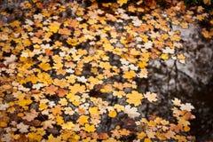 Oktober Royaltyfri Foto
