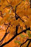 oktober Lizenzfreie Stockfotos