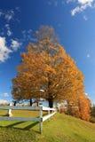 Oktober-Ahornholz Lizenzfreie Stockfotografie