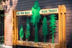 Oktober 15, 2017 Arnold/CA/USA - ID av vintergröna trädtyper som kan finnas i Calaveras stor träddelstatspark royaltyfria foton