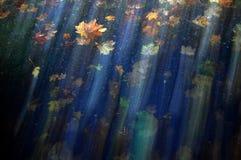 Oktober-Blätter Lizenzfreies Stockbild