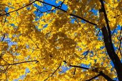 Oktober-Blau 6 Stockfotografie