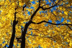 Oktober-Blauw 7 Royalty-vrije Stock Afbeeldingen