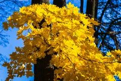 Oktober-Blauw 10 Royalty-vrije Stock Afbeelding