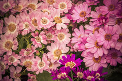 Oktober bloeit 4 Stock Foto