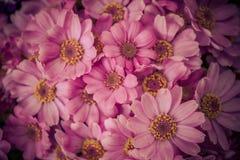 Oktober blommor 6 Arkivfoton