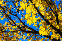 Oktober deppighet 9 arkivfoto