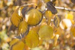 oktober för 2008 höstbakgrundsleaves yellow Royaltyfri Foto