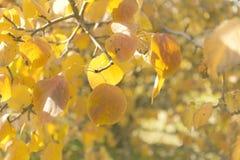 oktober för 2008 höstbakgrundsleaves yellow Royaltyfria Foton