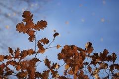 oktober för 2008 höstbakgrundsleaves yellow Royaltyfri Fotografi