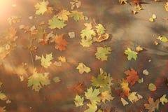 oktober för 2008 höstbakgrundsleaves yellow Royaltyfri Bild