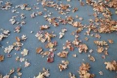 oktober för 2008 höstbakgrundsleaves yellow Arkivbild