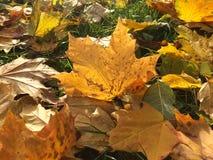 oktober för 2008 höstbakgrundsleaves yellow Arkivfoto