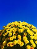 Oktober-Himmel Lizenzfreies Stockbild