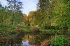 Oktober i den Sonian skogen Arkivfoton