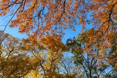 Oktober-Laub Stockbild