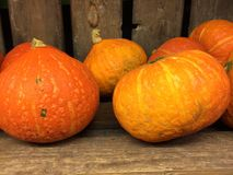 Oktober pumpkin royalty free stock photos