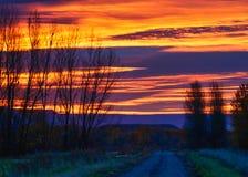 Oktober-Silhouetten in Dawn stock foto