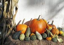 Oktober skörd royaltyfria foton