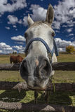 1 OKTOBER, 2016 - sluit omhoog paard snoot, dichtbij Ridgway, Colorado - enkel van Logboekheuvel Stock Afbeelding