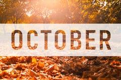 Oktober som hälsar text på färgrika nedgångsidor royaltyfri illustrationer