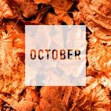 Oktober som h?lsar text p? f?rgrik nedg?ngsidabakgrund Ord Oktober med f?rgrika sidor fotografering för bildbyråer
