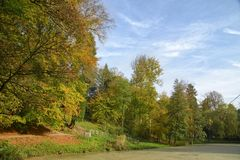 Oktober in Sonian-bos Stock Foto's