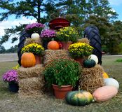 Oktober Sscene Royalty-vrije Stock Afbeelding