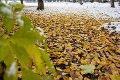 Oktober stad av Park skogen med första vintersnö Fotografering för Bildbyråer
