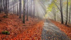 Oktober-Strahlen Stockfotos