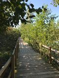 OKTOBER 2018, Turkiet i andra hand störst sötvattens- träskskog: Acarlar i Sakarya, Turkiet arkivbild