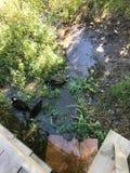 OKTOBER 2018, tweede grootste zoetwater het moerasbos van Turkije: Acarlar in Sakarya, Turkije stock afbeeldingen