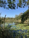 OKTOBER 2018, tweede grootste zoetwater het moerasbos van Turkije: Acarlar in Sakarya, Turkije royalty-vrije stock afbeeldingen
