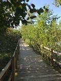 OKTOBER 2018, tweede grootste zoetwater het moerasbos van Turkije: Acarlar in Sakarya, Turkije stock fotografie