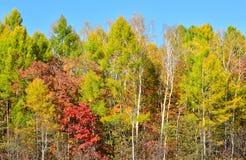 Oktober-Wald: alle Farben des Herbstes lizenzfreie stockfotografie