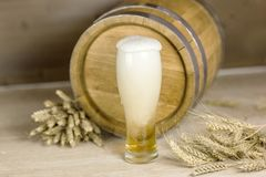 Oktoberfest. Beer is poured into mug of foam leaking against the background of a barrel of wheat Royalty Free Stock Photo