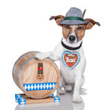 Oktoberfest dog. With beer barrel and gingerbread heart royalty free stock image