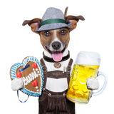 Oktoberfest dog. With beer mug and gingerbread heart, smiling happy royalty free stock images