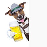 Oktoberfest dog. With a beer mug ,smiling happy behing a placard stock photo